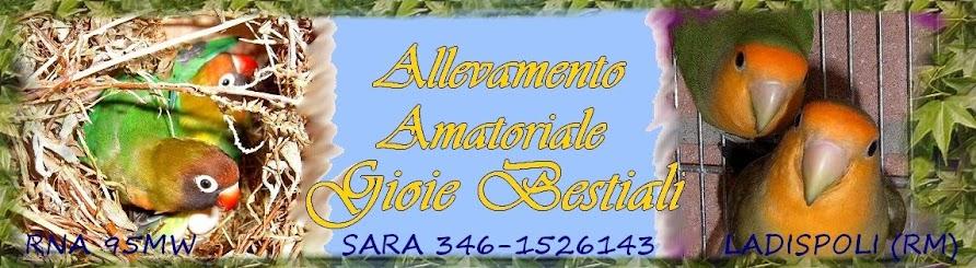 Gioie Bestiali Allevameno Inseparabili Roma