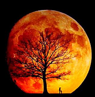 http://2.bp.blogspot.com/_OmFxyG88NTQ/SCDW4PEft4I/AAAAAAAAALs/gimYpHOJX50/s320/luna+roja+y+arbol.jpg