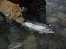 The Steelhead Dog