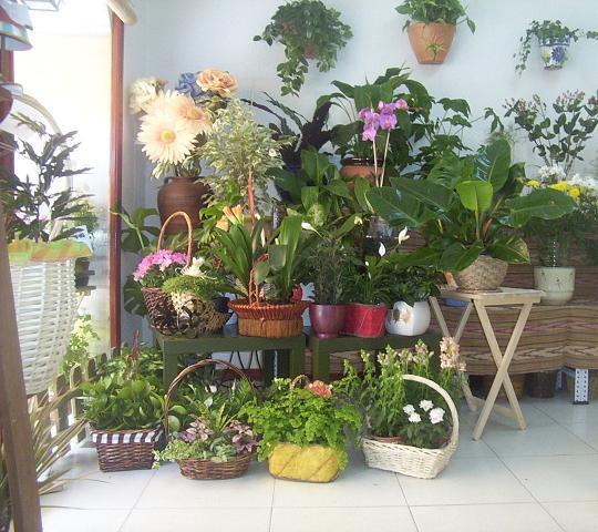 Mezzcolanza riego de las plantas de interior - Macetas para plantas de interior ...