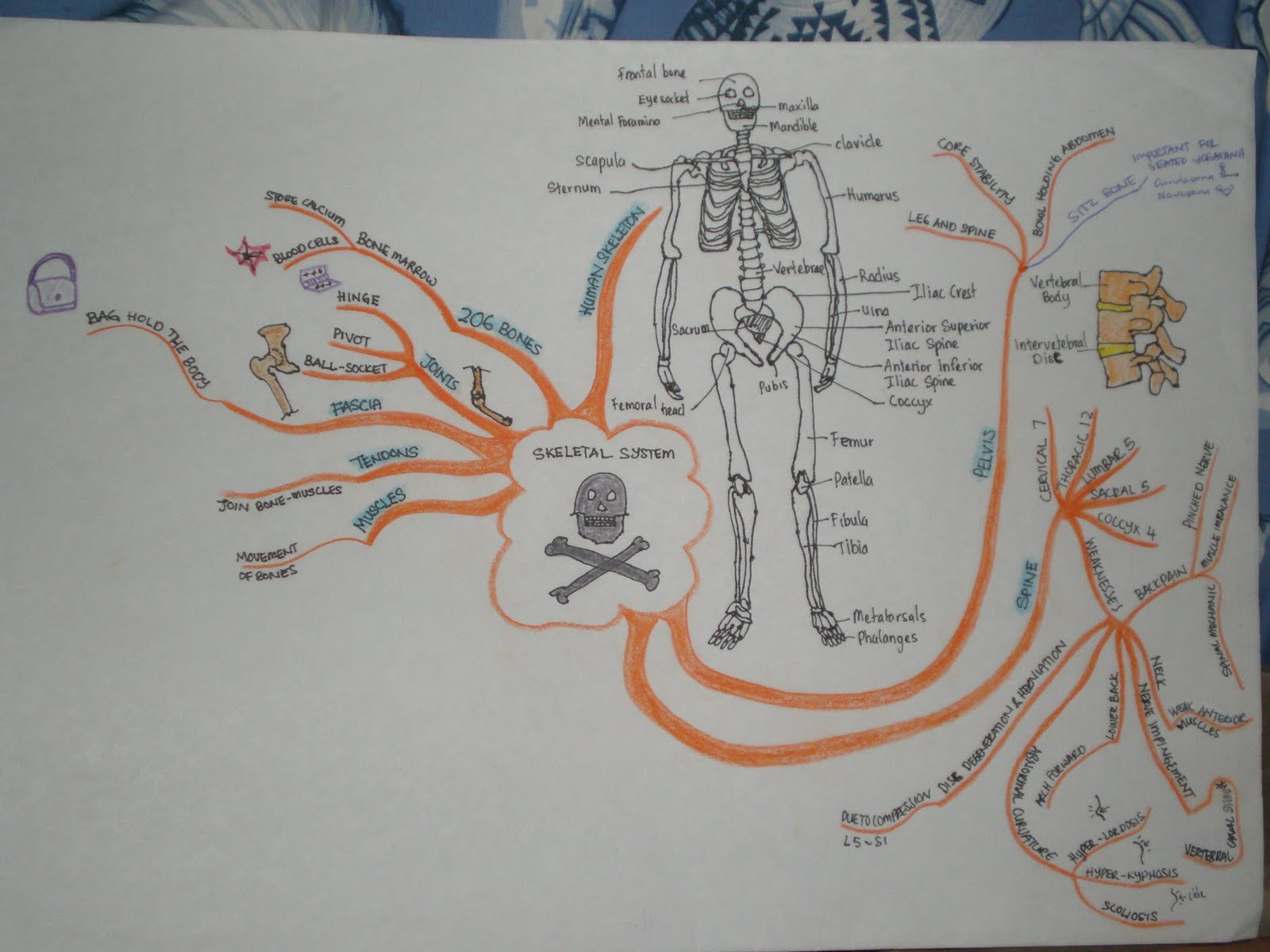 SUN YOGA TRAINEE TEACHERS: Amazing Yoga Mind Maps