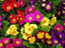 Como é maravilhosa a natureza.