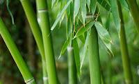 laine bambou