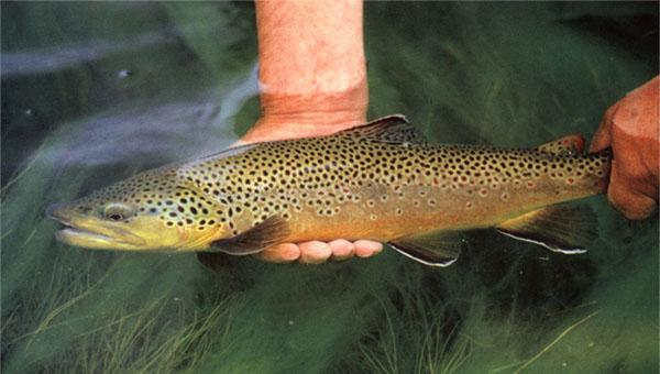 рыбалка форель рязань