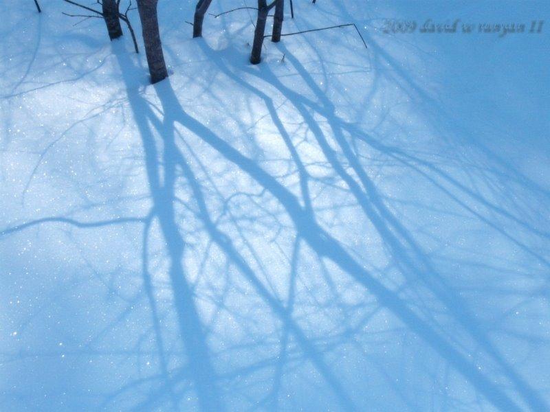 [shadow3.jpg]