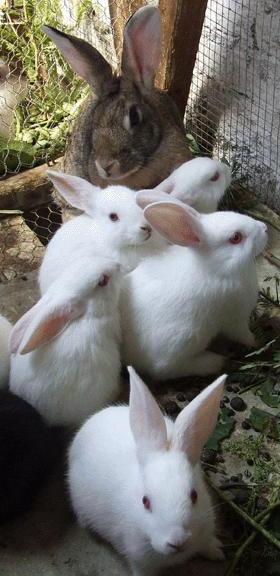 Conejos pequeños con su mamá coneja