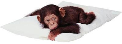 Chimpancé bebé