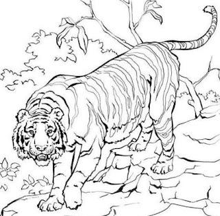 Dibujo de un tigre en el bosque para colorear