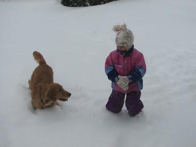Golden Retriever puppy playing in snow
