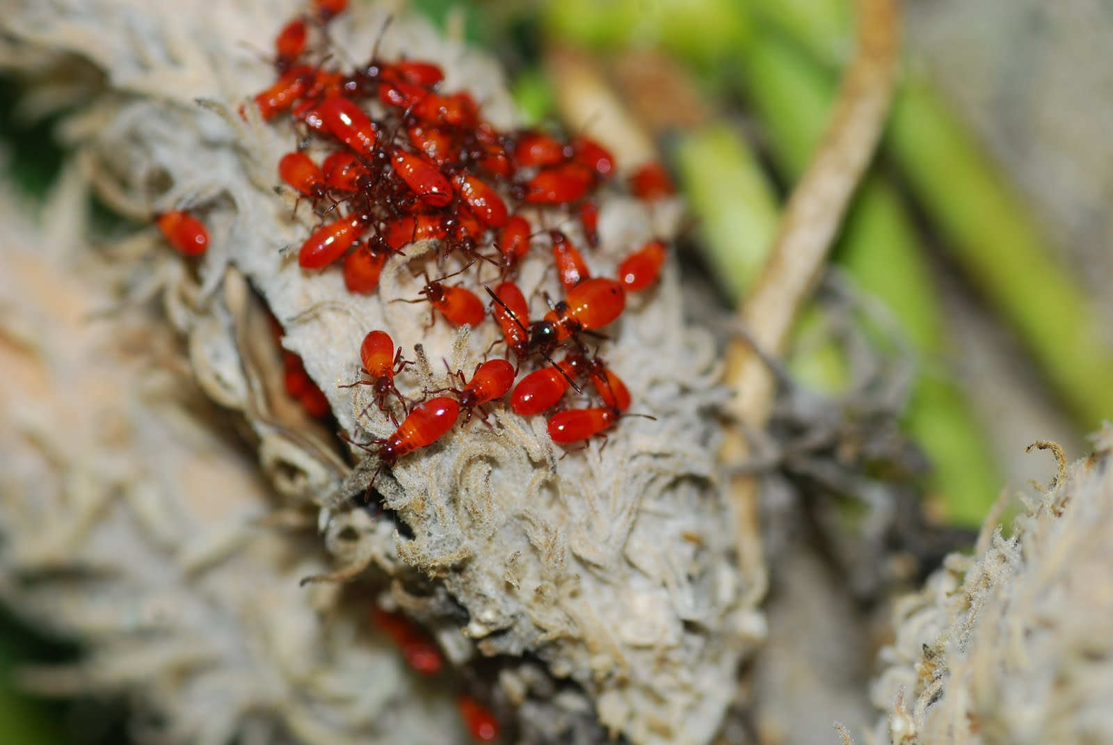 100 Pictures Of Tiny Red Bugs Spider Mites Get Rid