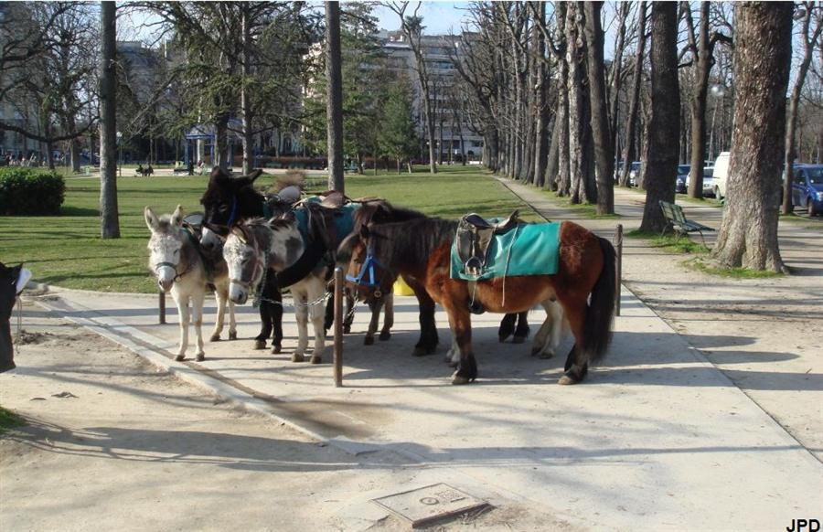 Paris bise art jardins du ranelagh for Jardin animaux paris