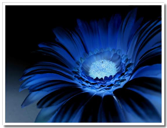 Gul blomma inverterad blir blå :-)