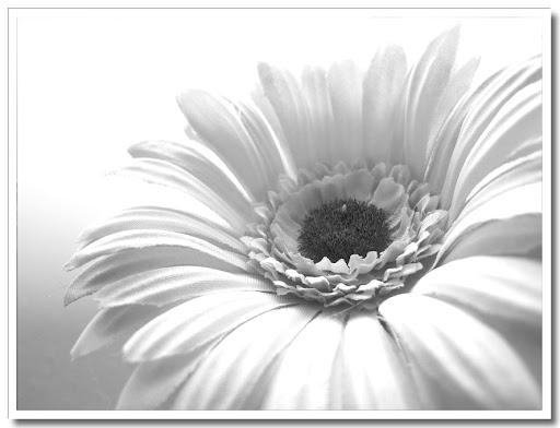 Blomma svartvit 4