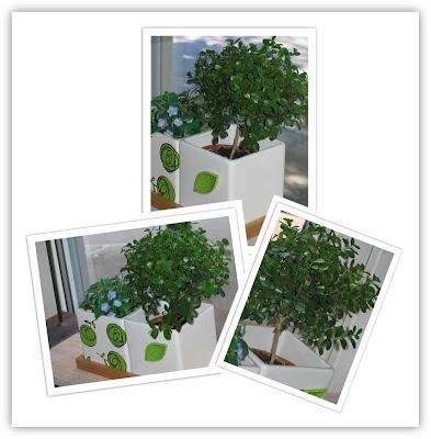 Mitt lilla träd, klicka för att se större bild