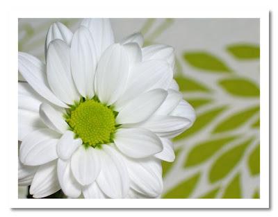 Blomma med grön prick :-) Klicka för att se större bild.