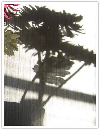 Skuggande växter