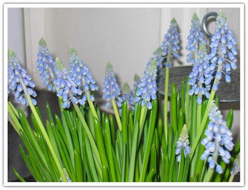Grönt o blått i blomkrukan