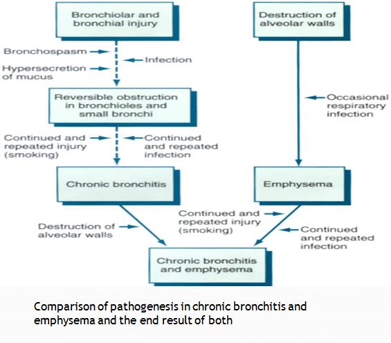 Comparison of Chronic Bronchitis and Emphysema. | Geoffrey ...