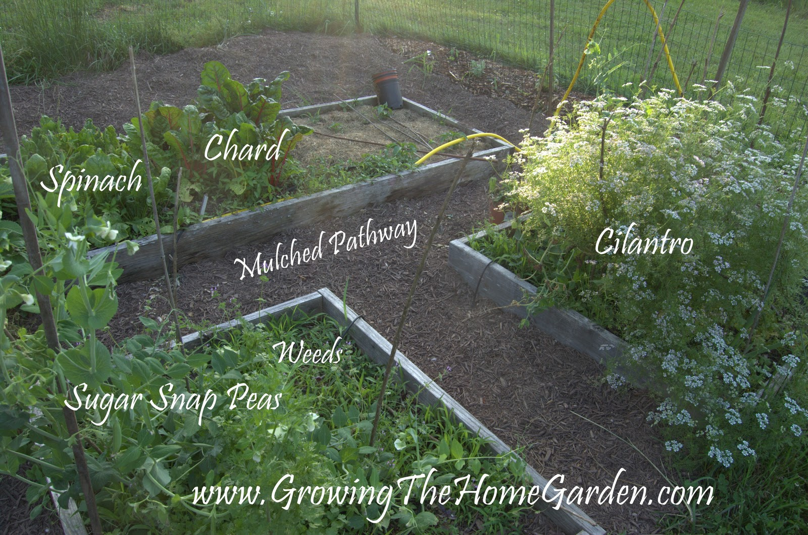 Things to Do in the Vegetable Garden (End of May) - Growing The Home ...
