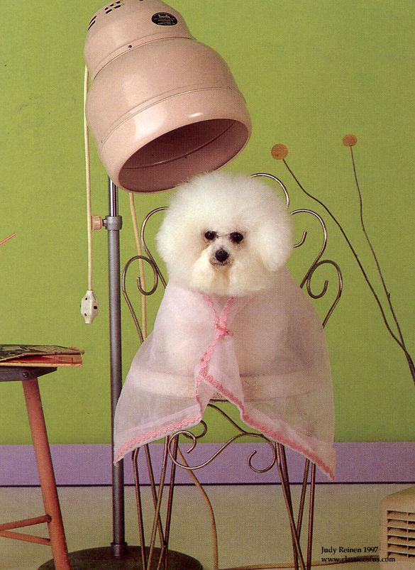 La Dog Grooming