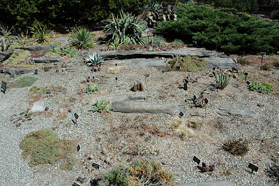 View of cactus bed