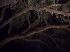 a night under the live oaks