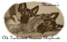 Mintern's German Shepherds