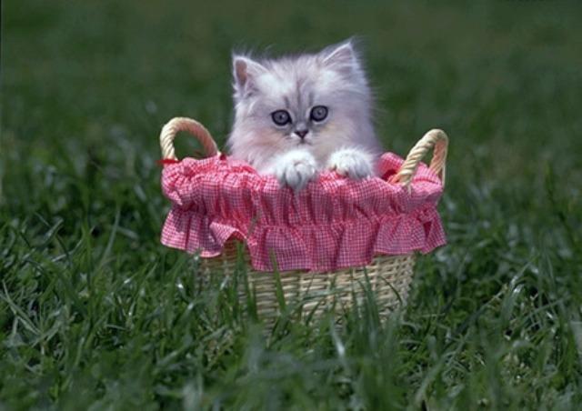 80415 - Cute Cat....