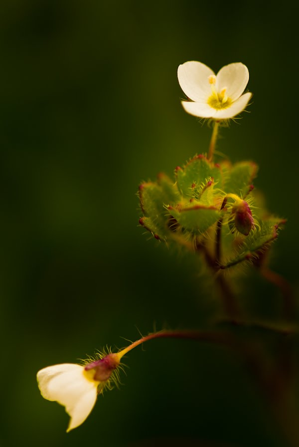 10919090 - The Exotic Flower In Best Photography