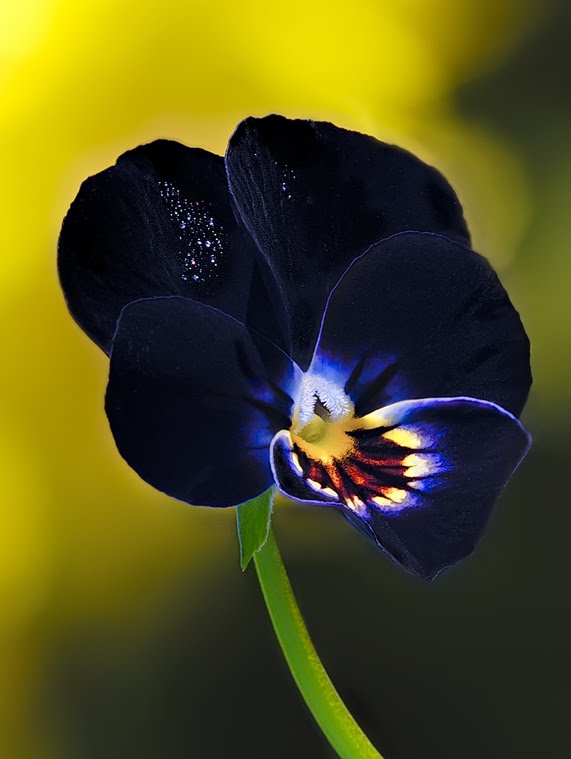 8868511 - The Exotic Flower In Best Photography