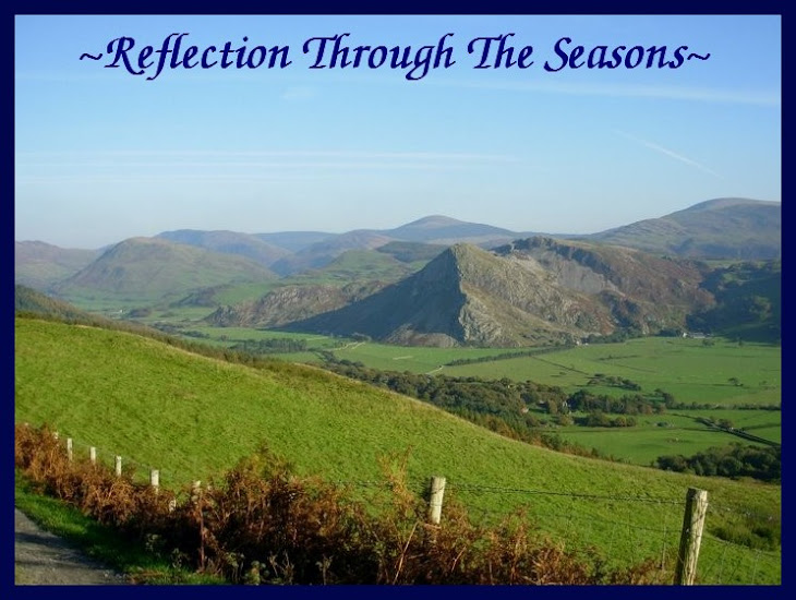 Reflection Through The Seasons