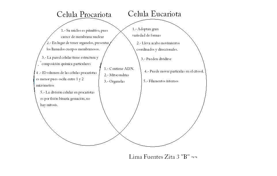 celula procariota y eucariota. DIFERENCIAS DE CELULA