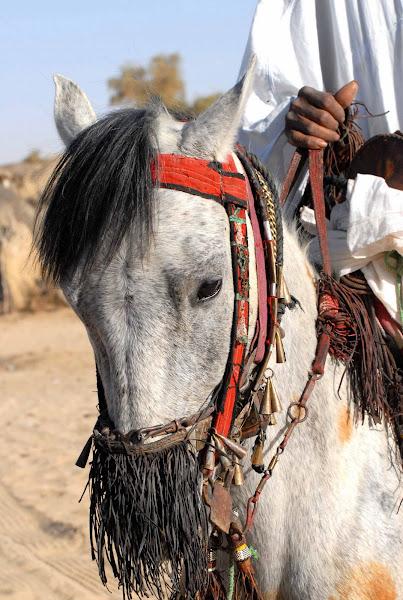 Traditional Tuareg Bridle