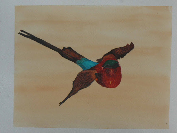 Carmine Bee Eater in Flight
