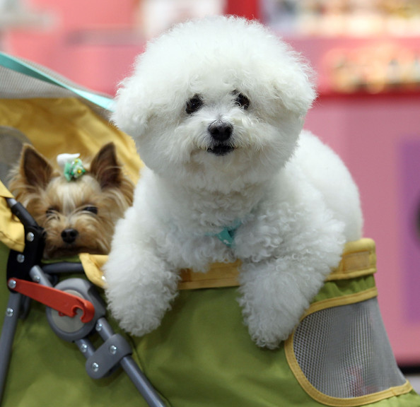 Beautiful World: Asian International DOG SHOW Photos 2010