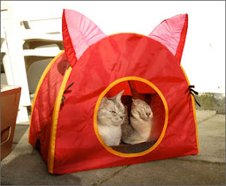 We just got this new cat tent. Our human had to go to Ikea to get a new couch and she got this cat tent for us. & Zagolandet: Zagolandet Comfort - camping