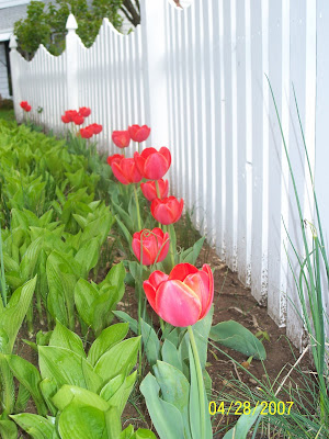 Tiptoeing Through Tulips After Madisons >> Best Shot Monday Tiptoe Through The Tulips A Madison Mom