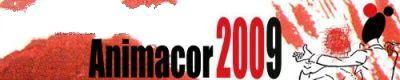 web Animacor