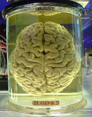 photo1 Scientists To Football Players: Give Us Your Brains