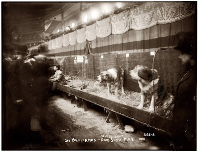 Kennel Club Puppies on At The 1908 Westminster Kennel Club Dog Show  Click To Enlarge