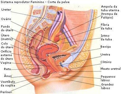 external image female.jpg