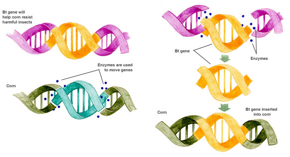 an overview of the process of cloning and the genetic duplicate of an individual in medical research You may have heard about researchers cloning, or identifying, genes that are responsible for various medical conditions or traits what's the difference when scientists clone an organism, they are making an exact genetic copy of the whole organism, as described above.