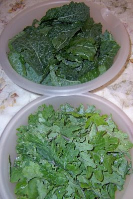 types kinds of kale