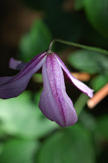 flower, purple, England, sunshine