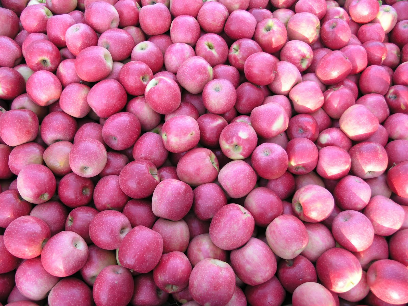 Eating Clean & Saving Your Green: Organic pink lady apples ...