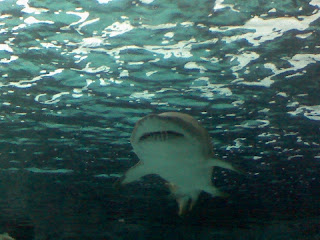Shark from Ripley's Aquarium (Anne Helmenstine)