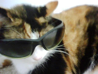 Cool Cat with Sunglasses (Anne Helmenstine)