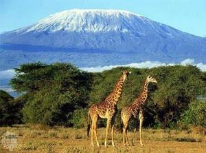 Kilimanjaro di http://unik-qu.blogspot.com/