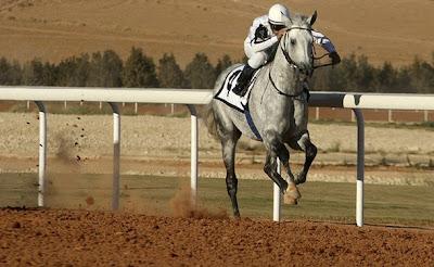 Caballo Árabe en una carrera