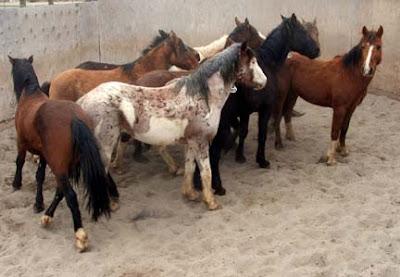 Grupo de Mustangs